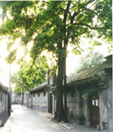 Beijing Lama Temple, Hutong and Beijing Zoo Tour