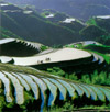 Terrace Fields in Longsheng
